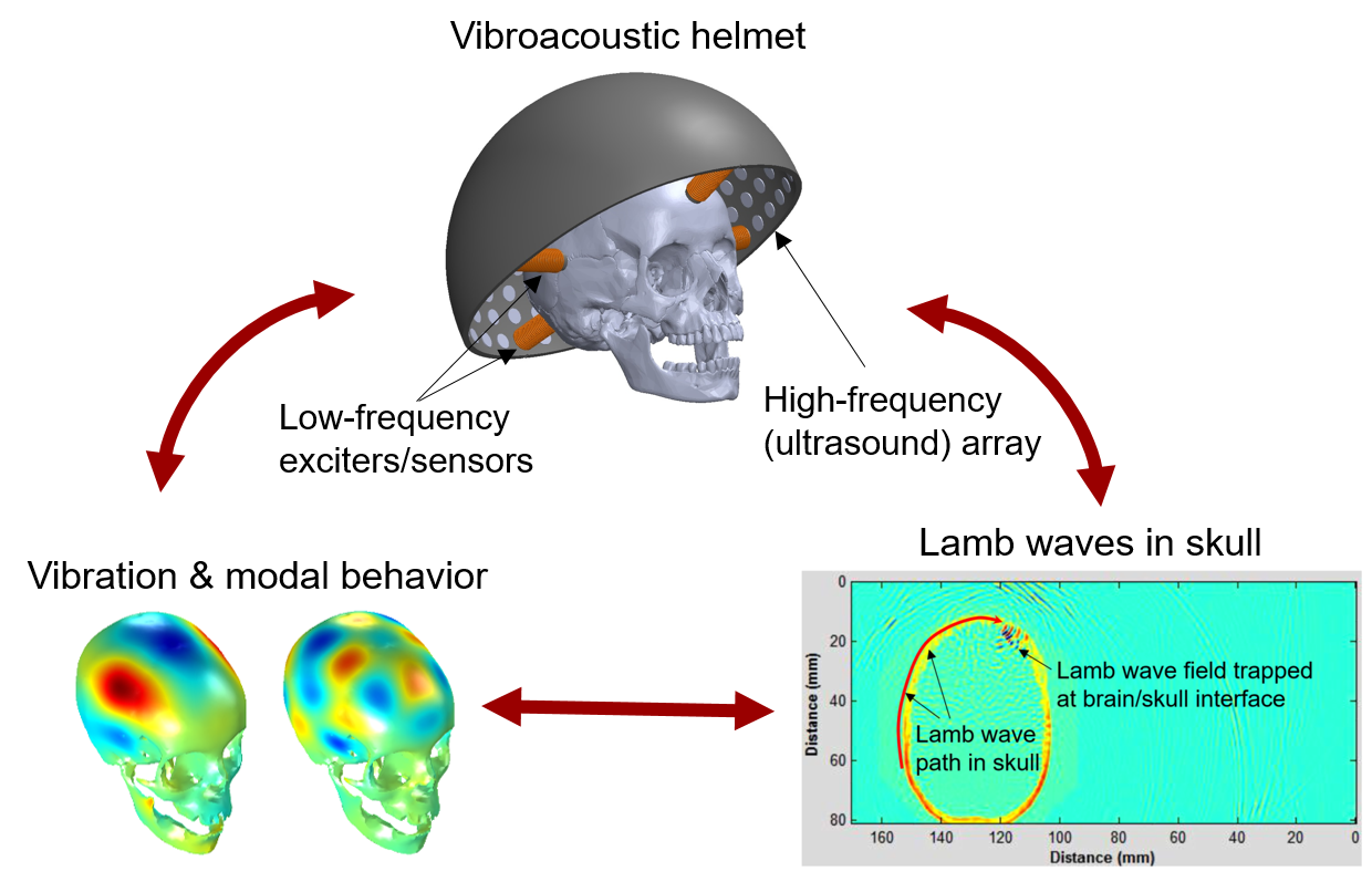Investigating coupled skull brain vibroacoustics and ultrasound the pis believe that the state of the art medical ultrasound research for brain can strongly benefit from a coupled investigation of skull brain combination ccuart Gallery