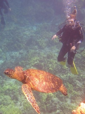 Lauren diving with a sea turtle